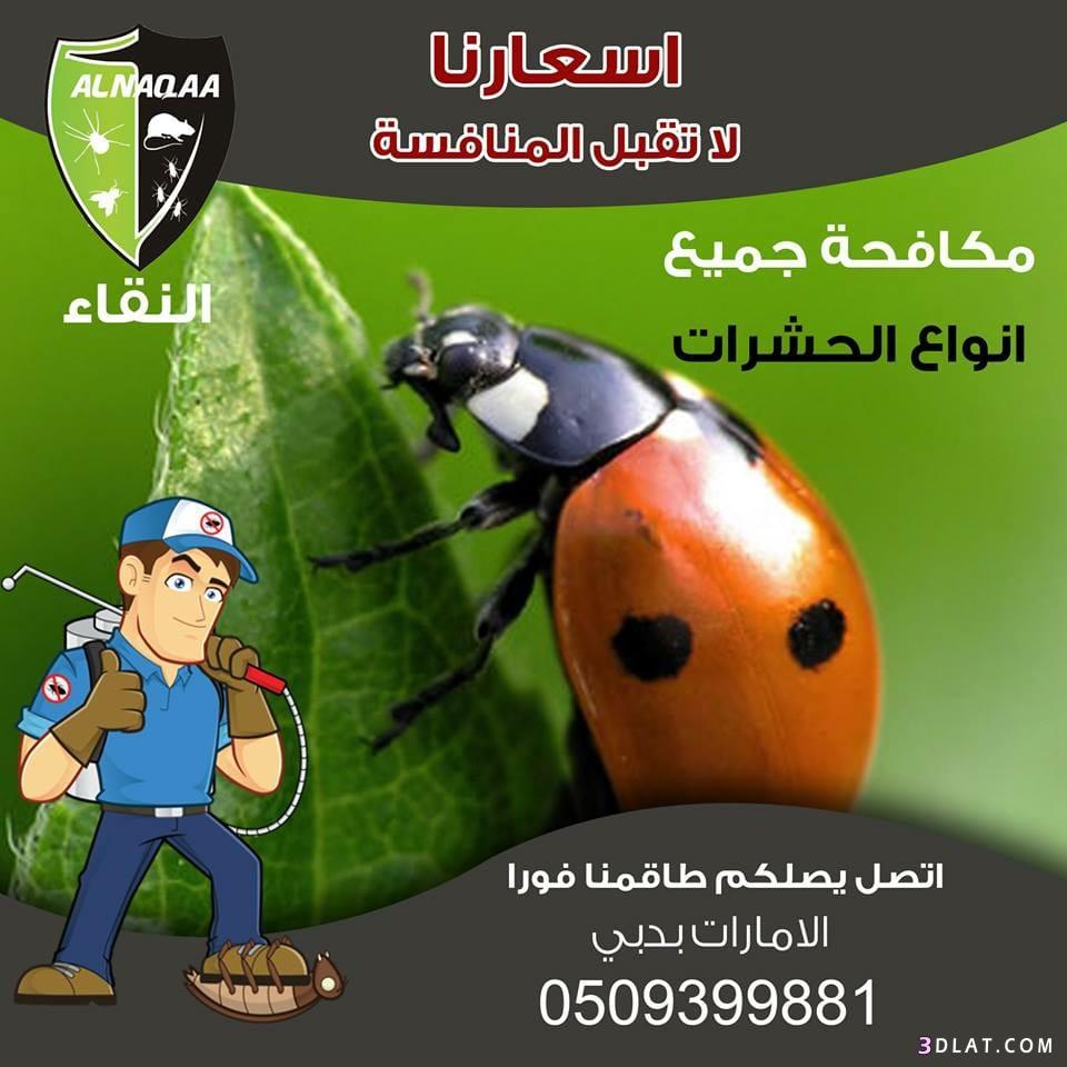 مكافحة الحشرات #رأس_الخيمة