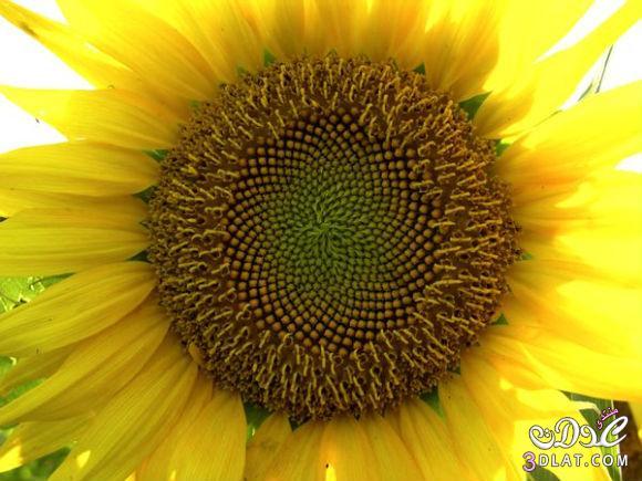 صور من الطبيعة للنبات والحيوان ..سبحان الله الخالق العظيم