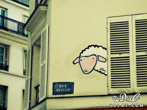 خرفان بمناسبة الاضحى Sheep خروف العيد 131903643014.jpg