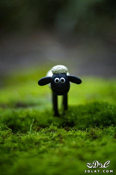 خرفان بمناسبة الاضحى Sheep خروف العيد 131903664511.jpg