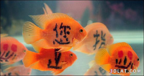 موضة الوشم الأسماك تنتشر الصين 13242367711.jpg