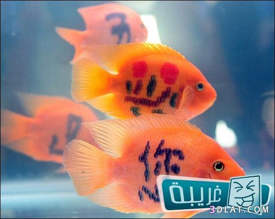موضة الوشم الأسماك تنتشر الصين 13242367722.jpg