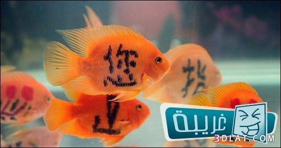 موضة الوشم الأسماك تنتشر الصين 13242367723.jpg