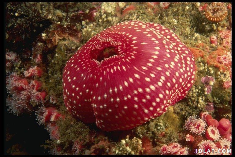 البحر الاحمر البحر الاحمر