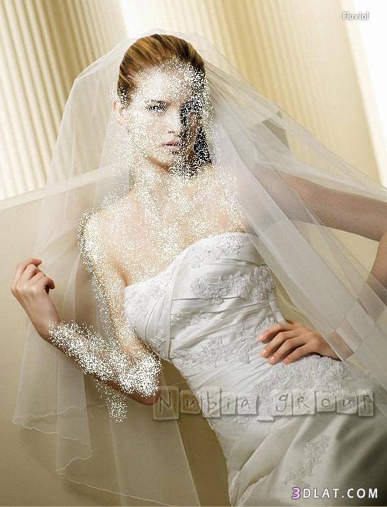 عروس 2021 عرائس الجزائر