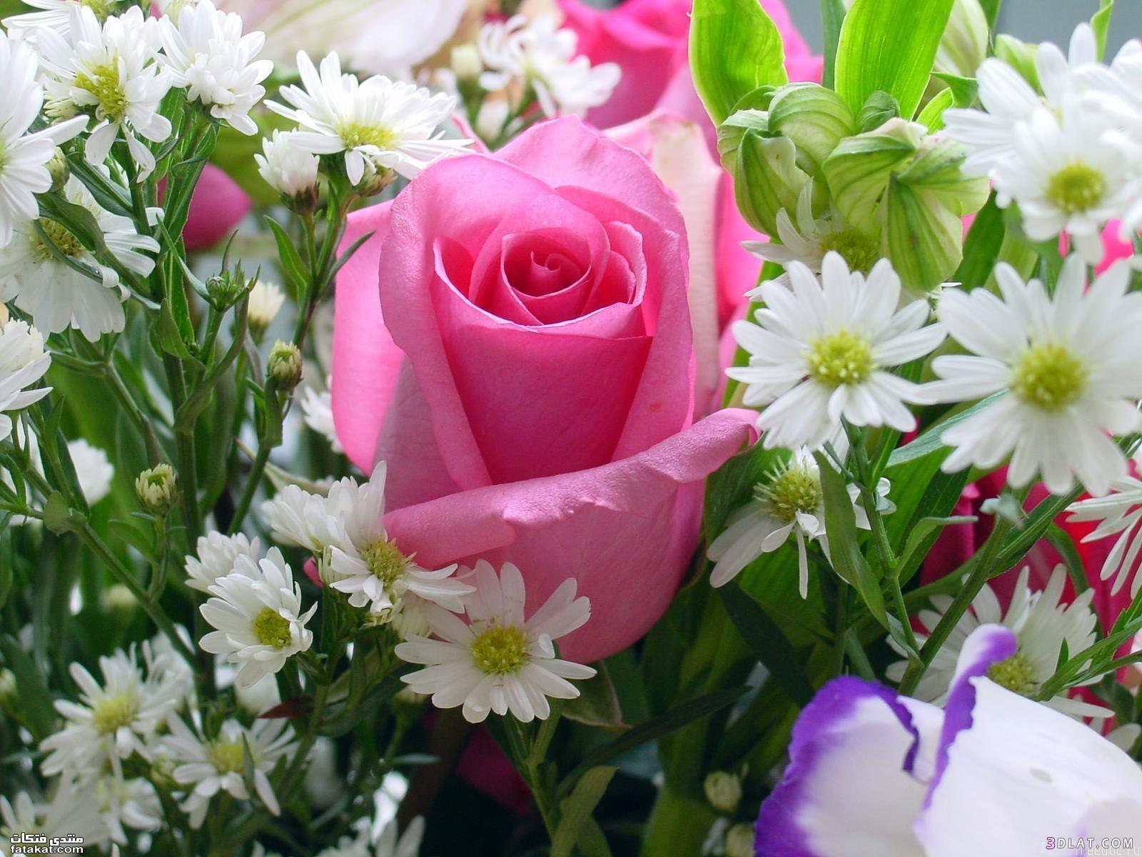 سواروفسكي بمجموعة الوردي الناعمةرسومات حنة لاحلى عروسةصور روعة لاحلي تورتاحلى