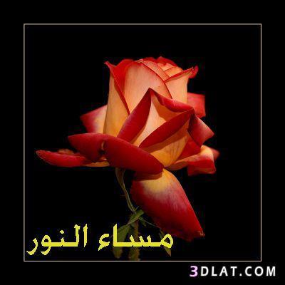 صباح ومساء الخير تجميعى 13417549643.jpg