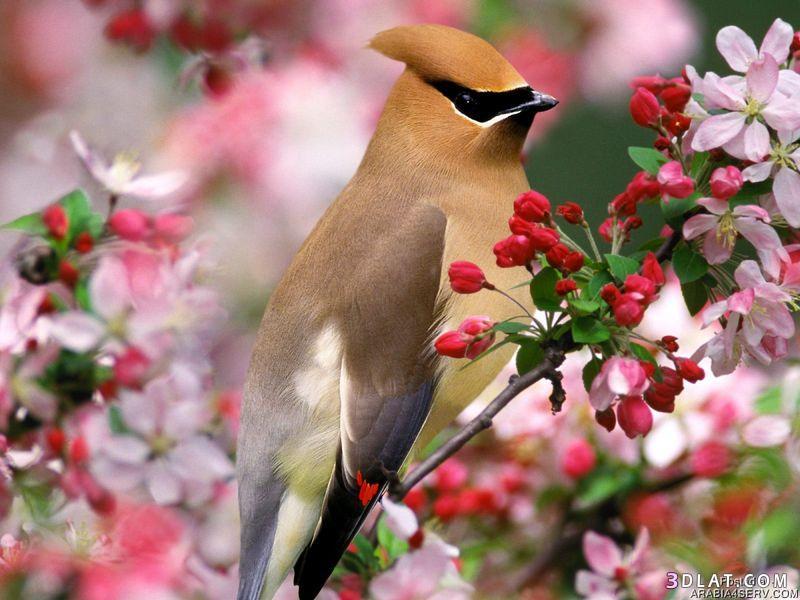 صور طيور ملونه جميله اروع