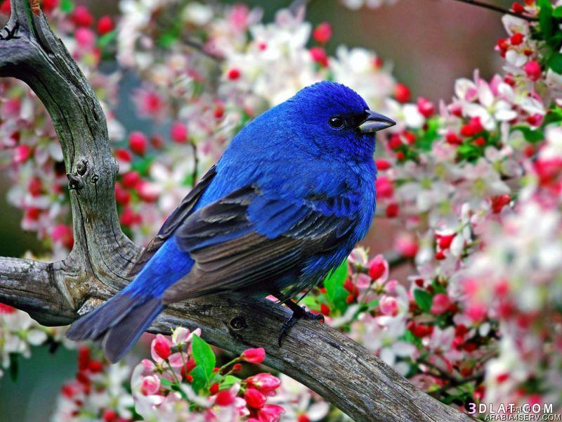 13433335001 صور طيور جميله خلابه أجمل الطيور جديدة2014