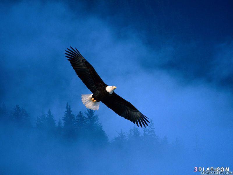 13433335012 صور طيور جميله خلابه أجمل الطيور جديدة2014