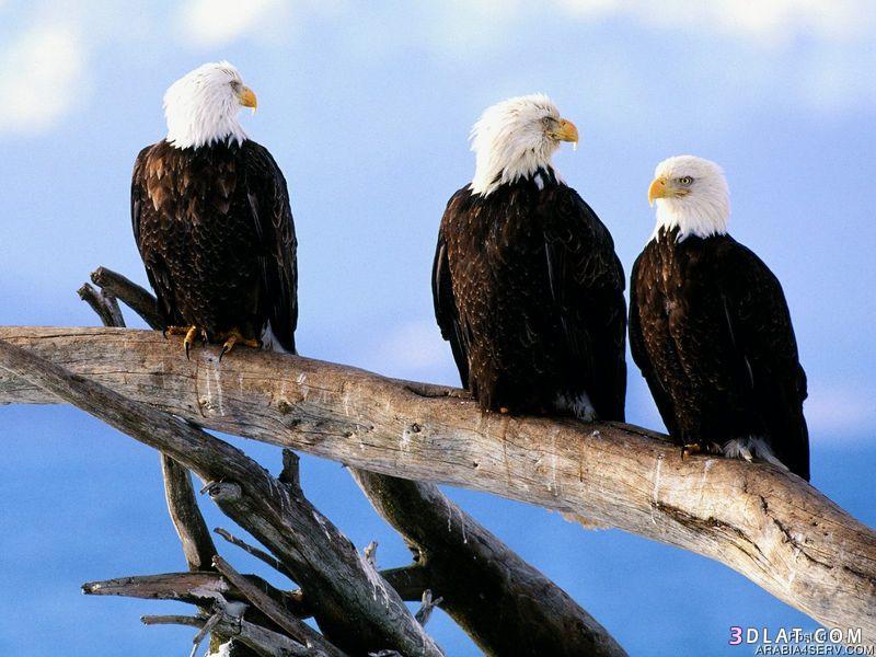 13433335013 صور طيور جميله خلابه أجمل الطيور جديدة2014