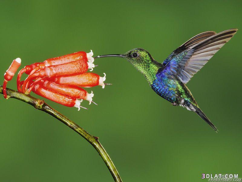 13433335014 صور طيور جميله خلابه أجمل الطيور جديدة2014