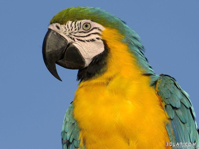 13433335016 صور طيور جميله خلابه أجمل الطيور جديدة2014