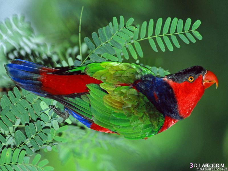 13433335017 صور طيور جميله خلابه أجمل الطيور جديدة2014