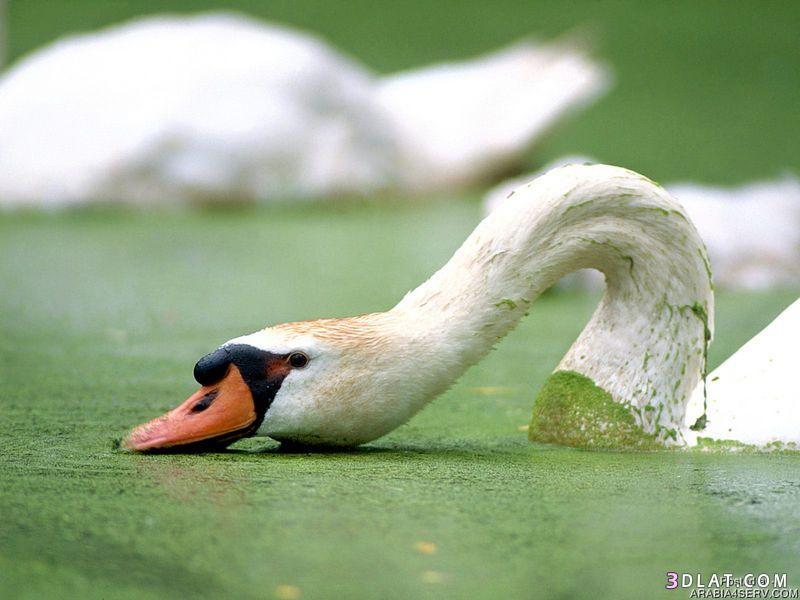 13434194031 صور طيور جميله خلابه أجمل الطيور جديدة2014