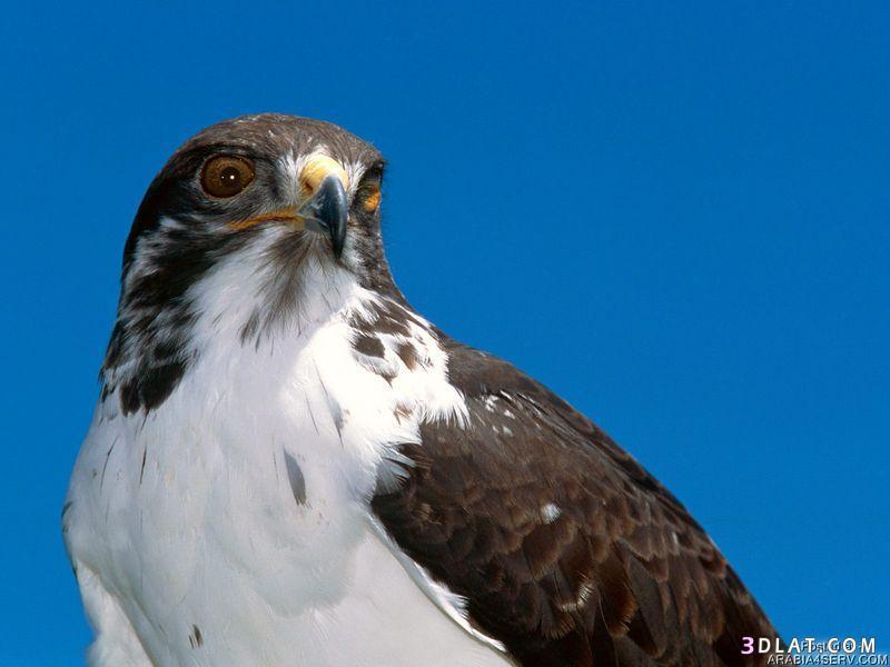 13434194032 صور طيور جميله خلابه أجمل الطيور جديدة2014