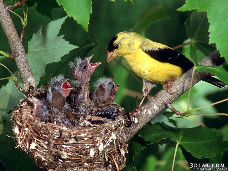 13434194033 صور طيور جميله خلابه أجمل الطيور جديدة2014