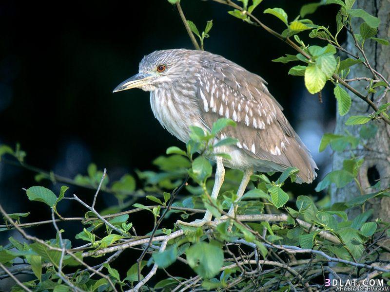 13434194034 صور طيور جميله خلابه أجمل الطيور جديدة2014
