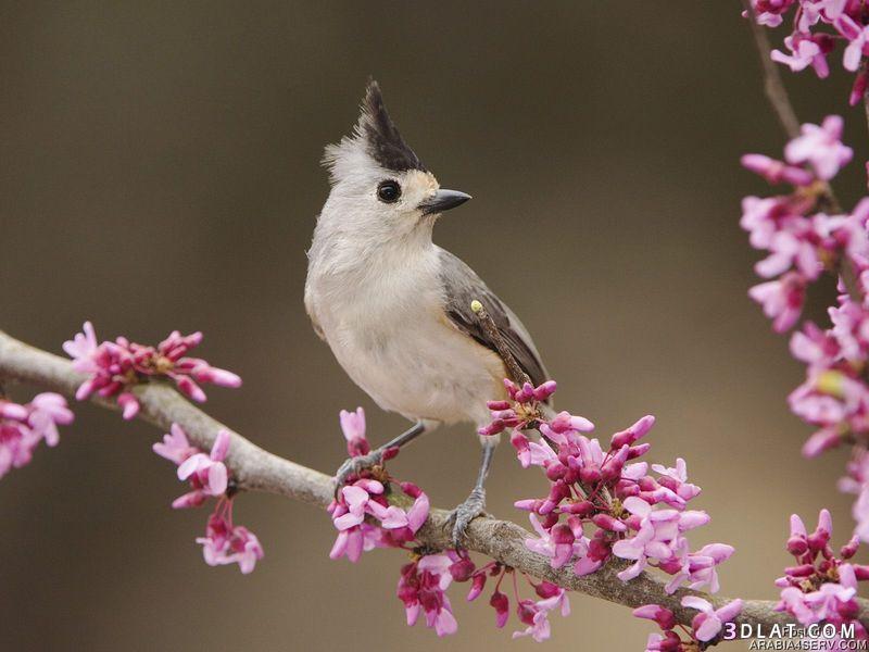 13434194035 صور طيور جميله خلابه أجمل الطيور جديدة2014