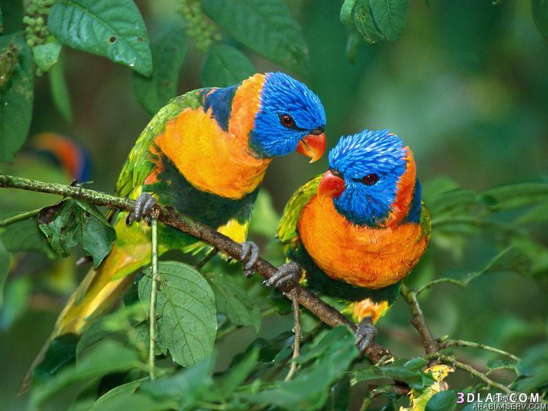 13434194036 صور طيور جميله خلابه أجمل الطيور جديدة2014