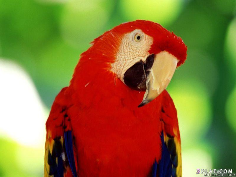 13434194037 صور طيور جميله خلابه أجمل الطيور جديدة2014