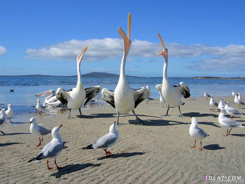 13434210001 صور طيور جميله خلابه أجمل الطيور جديدة2014