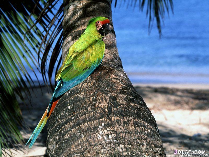 13434210003 صور طيور جميله خلابه أجمل الطيور جديدة2014