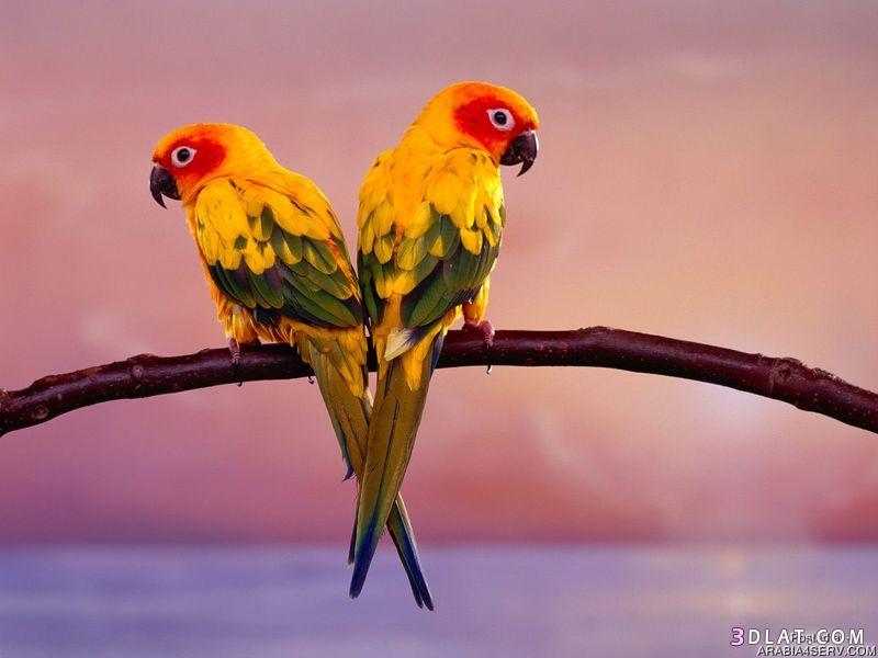 13434210004 صور طيور جميله خلابه أجمل الطيور جديدة2014
