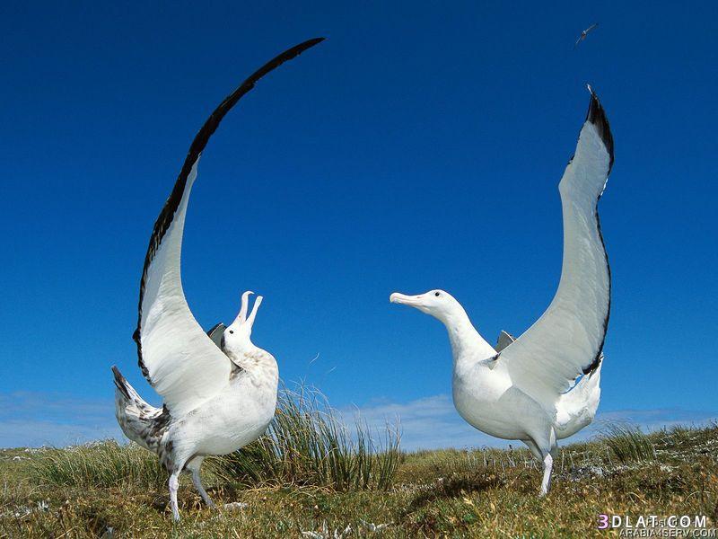13434210016 صور طيور جميله خلابه أجمل الطيور جديدة2014
