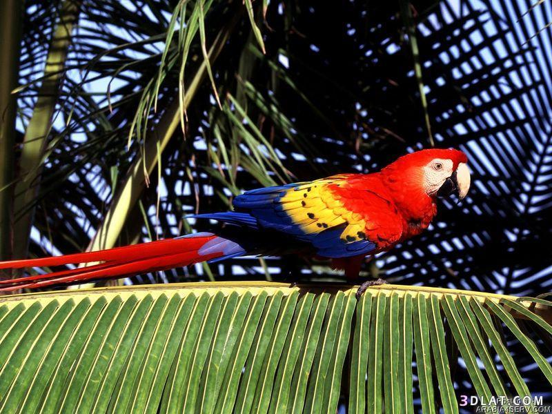 13434211042 صور طيور جميله خلابه أجمل الطيور جديدة2014