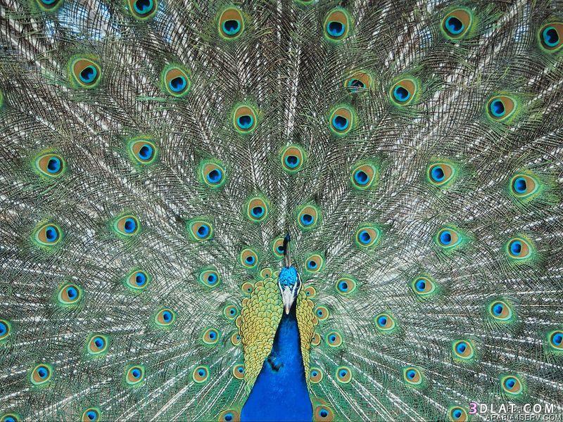 13434211043 صور طيور جميله خلابه أجمل الطيور جديدة2014