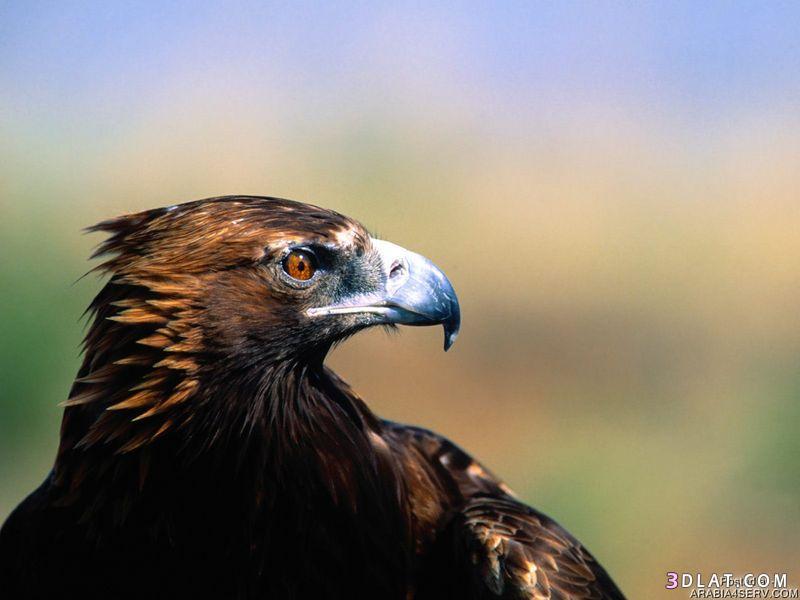13434211044 صور طيور جميله خلابه أجمل الطيور جديدة2014
