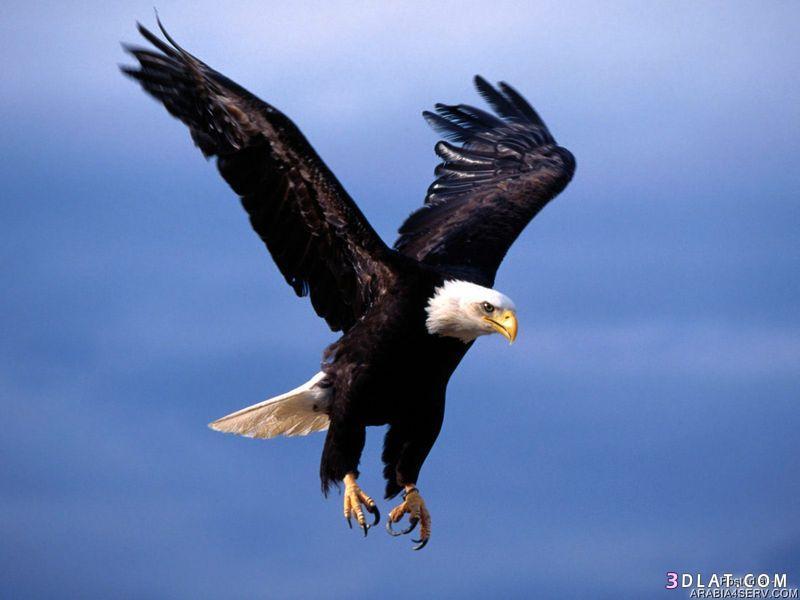 13434211045 صور طيور جميله خلابه أجمل الطيور جديدة2014