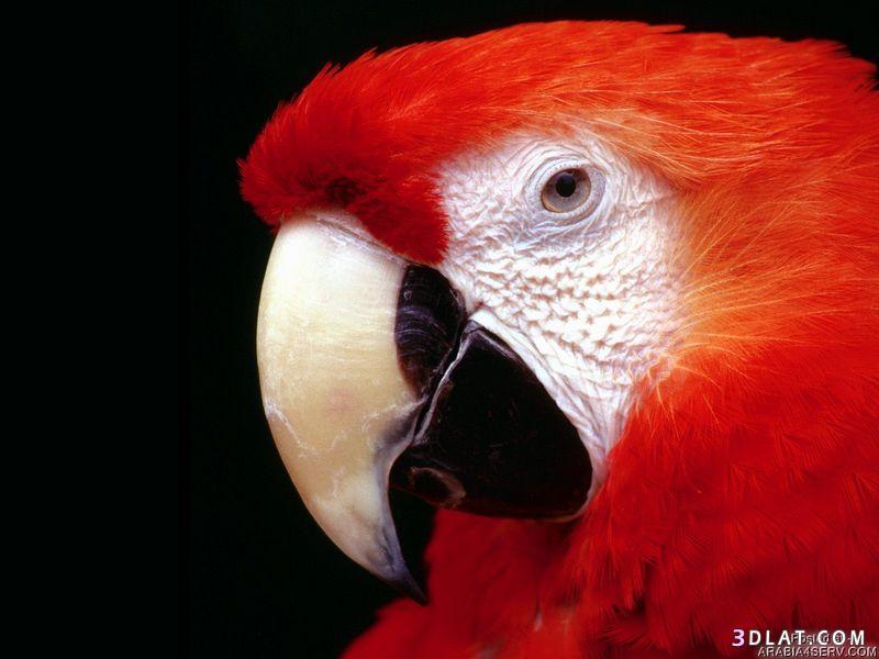 13434211046 صور طيور جميله خلابه أجمل الطيور جديدة2014