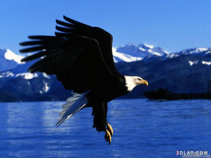 13434211047 صور طيور جميله خلابه أجمل الطيور جديدة2014