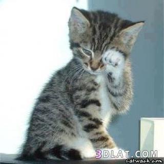 حيوانات حزينة تشعرك بلحزن 134800953417.jpg