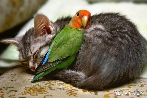 صور حيوانات Photos animals
