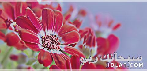 دينية 2019 جميلة،صور اسلامية للتواقيع،صور بلاك 136024799015.jpg