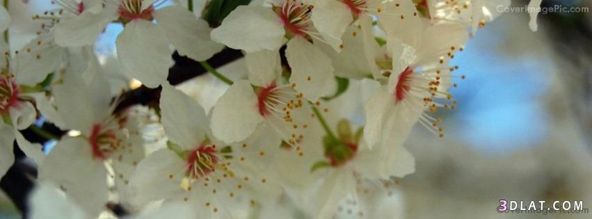 زهور وورود فيس بوك