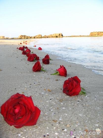 حب,صور رومانسية,صور منوعه,صور تعبر الشعور,صور احاسيس 13610674284.jpg