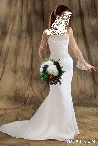 فساتين زفاف سنبل للعروسة صور فساتين زفاف