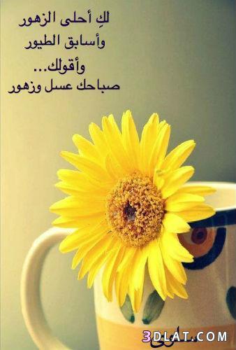 صباح العسل صباح الخير مساء