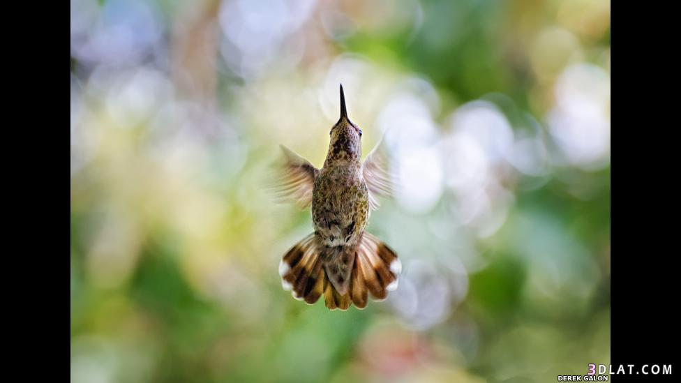 مناظر طبيعية جديدة مسابقة التصوير