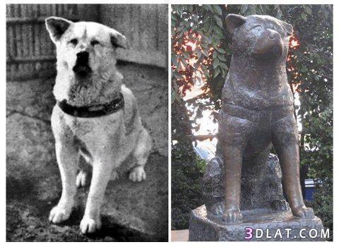 تمثال هاتشيكو الوفي