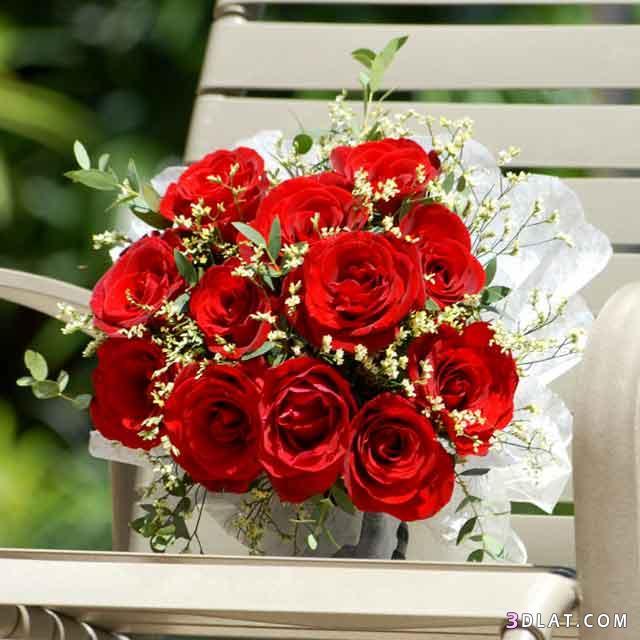 صور رود احمر رومنسى 2020 ورد احمر عنوان الحب ورود حمراء صور باقات