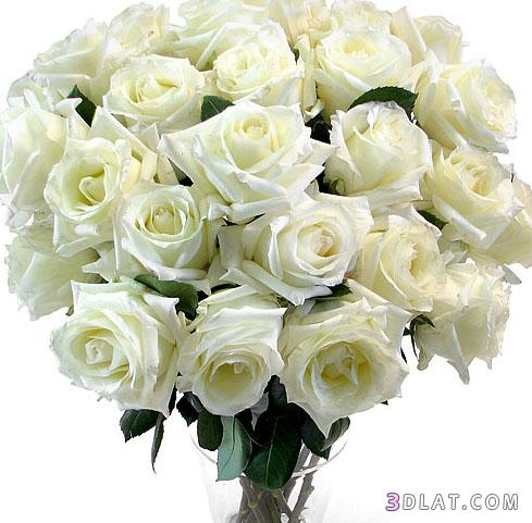 Обои букет роз белых  раздел Песочница размер