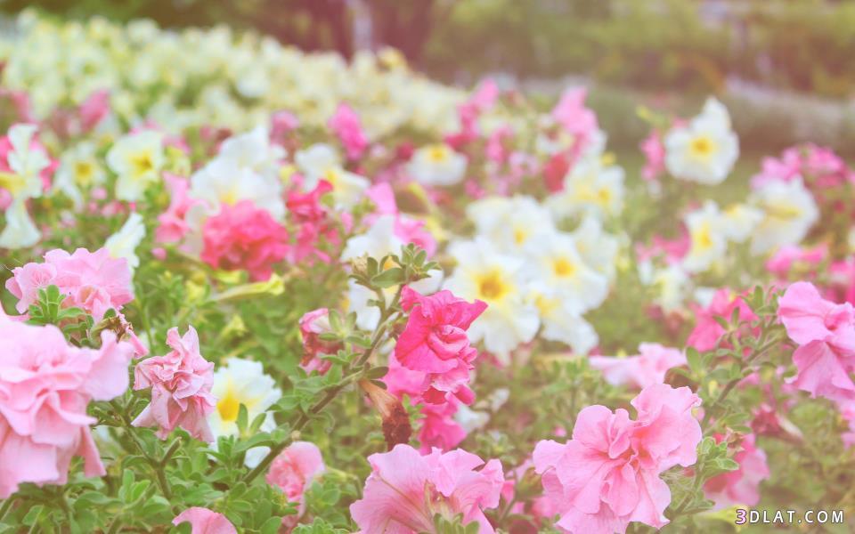 Картинки нежность цветы 2