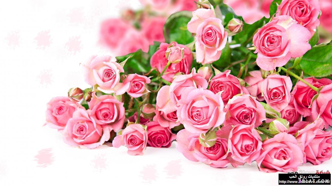 اكبر مجموعة الورد الرائعة لسطح المكتب 13661417841.jpg