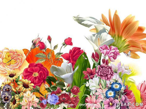 اكبر مجموعة الورد الرائعة لسطح المكتب 13661417842.jpg