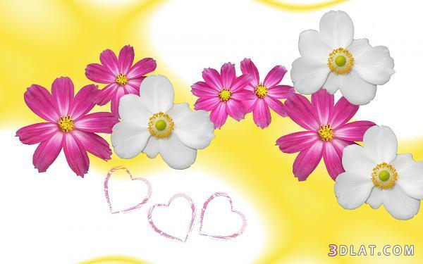 اكبر مجموعة الورد الرائعة لسطح المكتب 13661421321.jpg